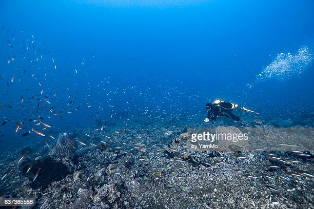Divers swimming along the reef with school of fusilier