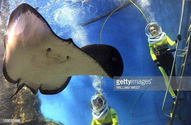 Divers wear a new custommade Shark Walker helmet allowing visitors to walk underwater surrounded by sharks giant stingrays and hundreds of fish at...