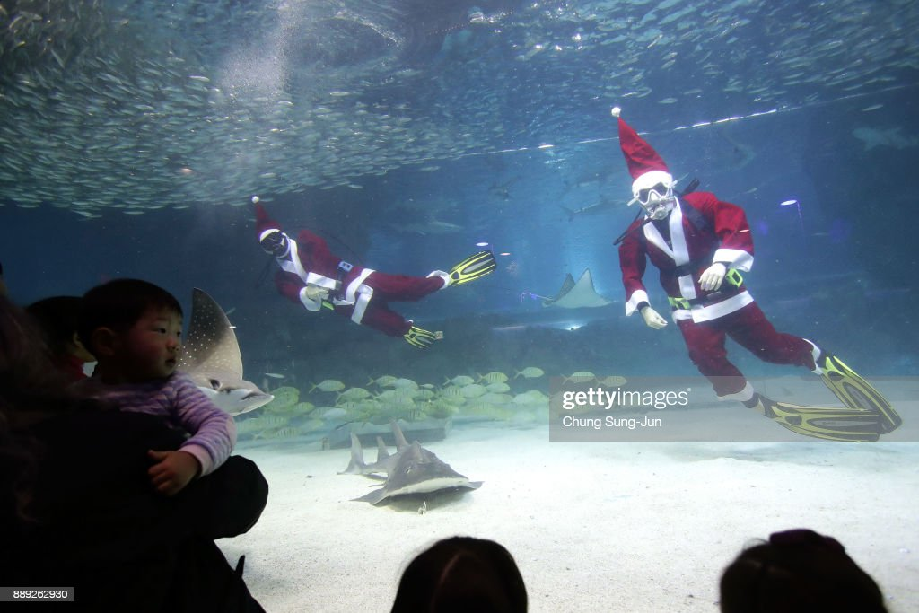 Santa Claus Divers Swim With Fishes In Seoul