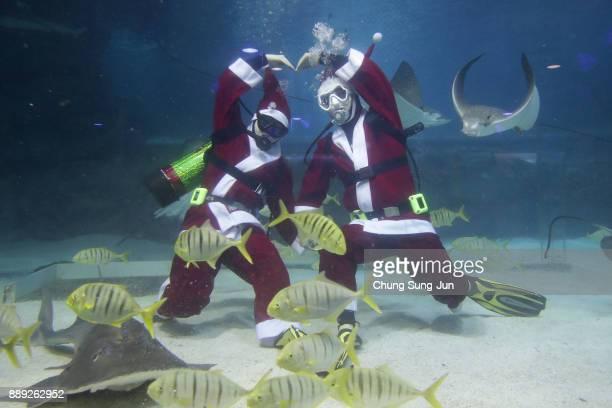Divers wearing Santa Claus costume swim in the tank at COEX Aquarium on December 10 2017 in Seoul South Korea