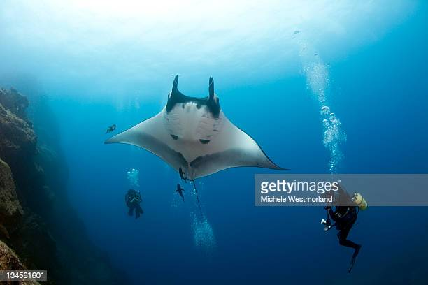 Divers with Giant Manta Ray