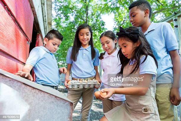 Diverse elementary students gathering chicken eggs during field trip