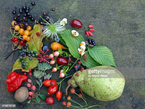 Diversity of Autumnal Seeds and Fruits