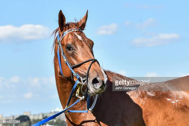 Divine Messenger after winning the Have You RSVP'd Handicap at Flemington Racecourse on September 27 2017 in Flemington Australia