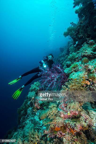 Plongée sous-marine le dépôt est de Palau-Micronésie