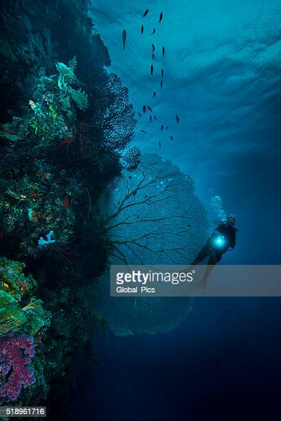 Diving the drop off's in Palau - Micronesia