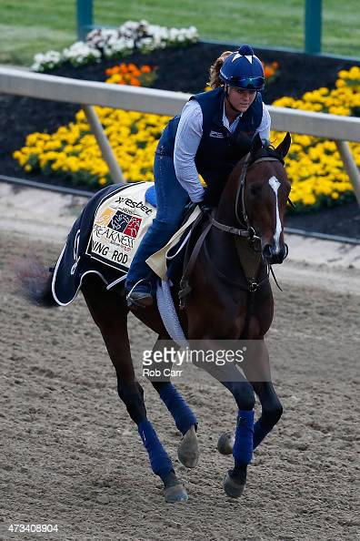 Divining Rod trains on the track for the 140th Preakness Stakes at Pimlico Race Course on May 15 2015 in Baltimore Maryland