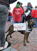 Dixon a dog owned by Fairpoint worker Patrick Shane of Vinalhaven carries a couple of messages on his back as he attends the striking Fairpoint...