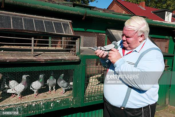 DOberhausenOsterfeld Eisenheim settlement workers settlement route of industrial heritage pigeon breeding breeder Manfred Heldt at his pigeon cot in...