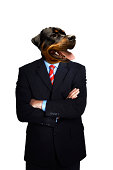 Doberman Businessman standing with arms folded