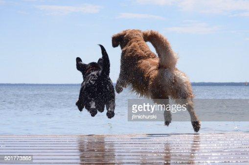 Dock Jumping Buddies : Stock Photo