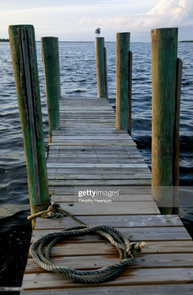 Dock with rope for boat tie up; shore bird on piling; ocean and sky beyond : Stock Photo