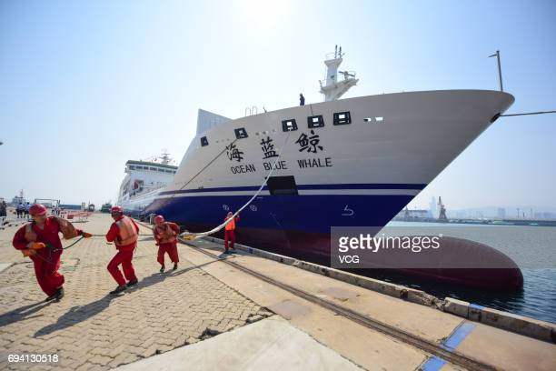 Dockers drag the domestically designed large passenger container ship Ocean Blue Whale onto the shore at Yantai Port on June 8 2017 in Yantai...