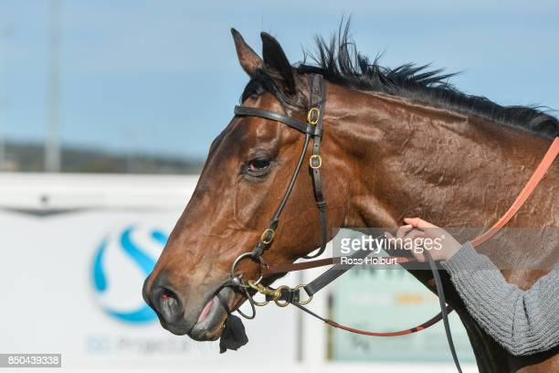 Doc's Hero after winning the XXXX Gold BM70 Handicap at Racingcom Park Synthetic Racecourse on September 21 2017 in Pakenham Australia