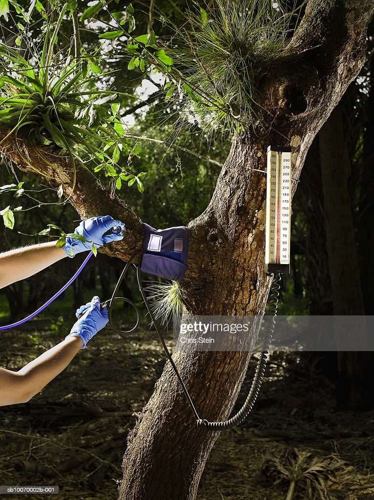 Doctor checking blood pressure of tree : Stock Photo