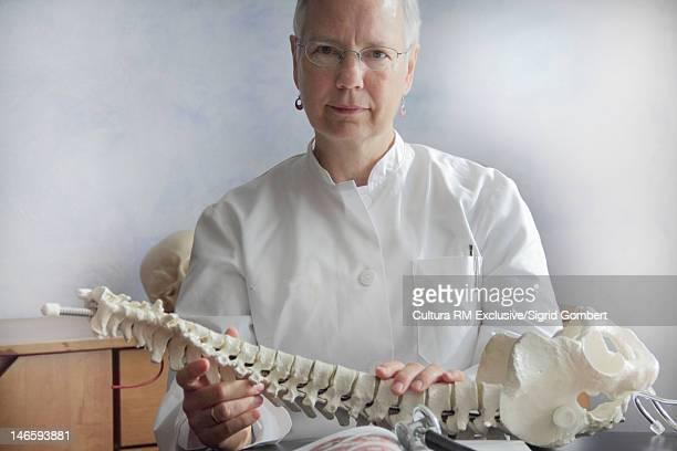 Doctor examining spine model in office
