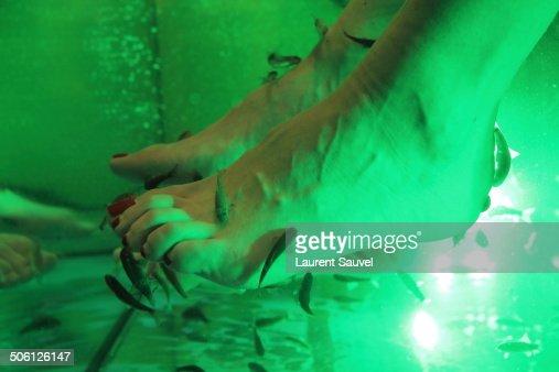 Fish pedicure foto e immagini stock getty images for Doctor fish pedicure