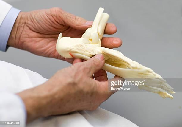 Médico segurando o pé do Esqueleto