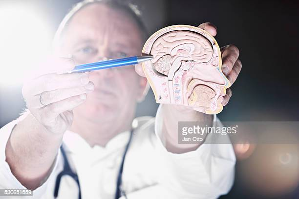 Doctor pointing at cerebrum