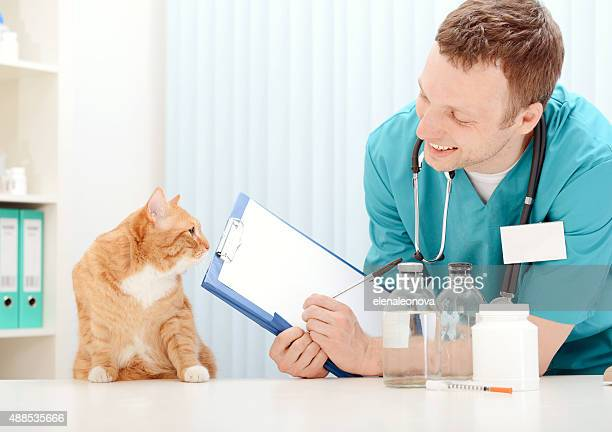 Doctor veterinarian examining beautiful adult cat