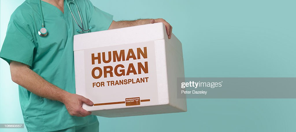 Doctor with human transplant container : Stock Photo