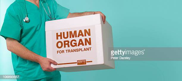Doctor with human transplant container