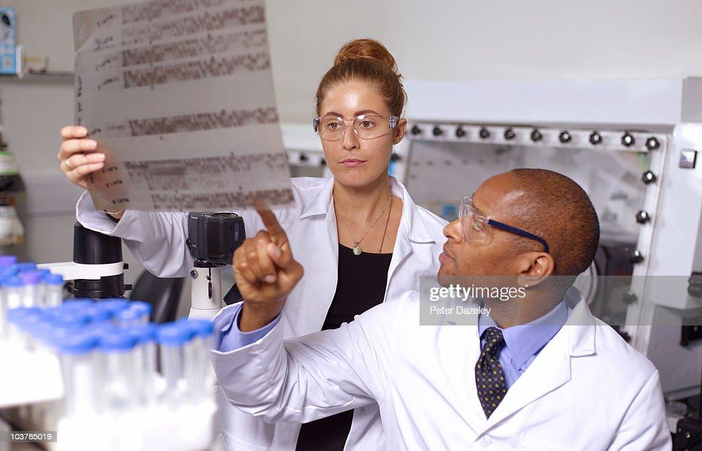 Doctors examining DNA sequencing gel : Stock Photo