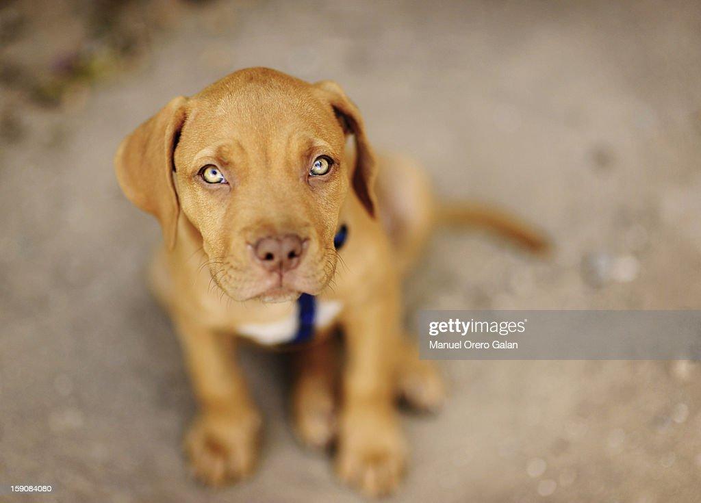 Dog Abandoned : Stock Photo