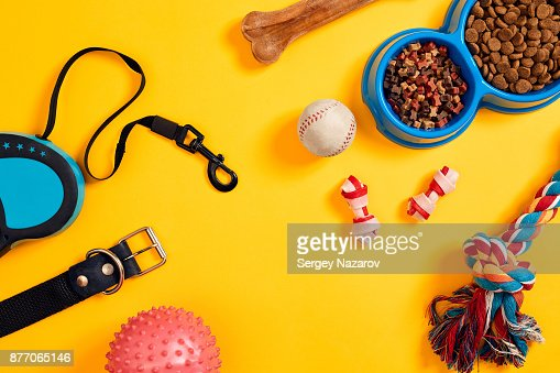 Dog accessories on yellow background. Top view. Pets and animals concept : Stock Photo