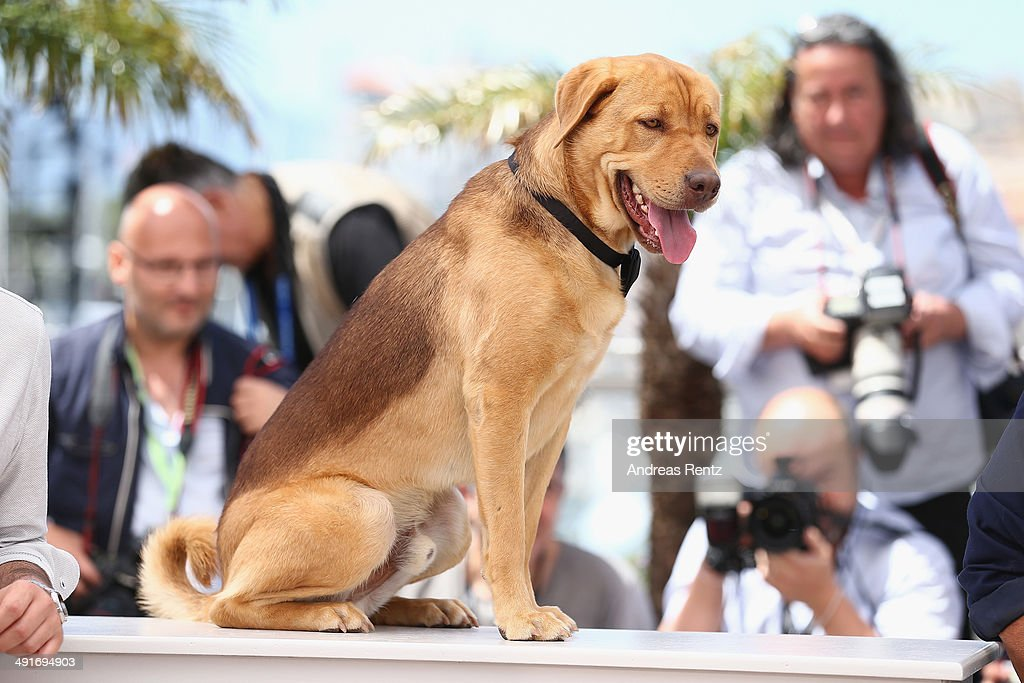 Dog actor Hagen attends the 'Feher Isten' photocall at the 67th Annual Cannes Film Festival on May 17 2014 in Cannes France