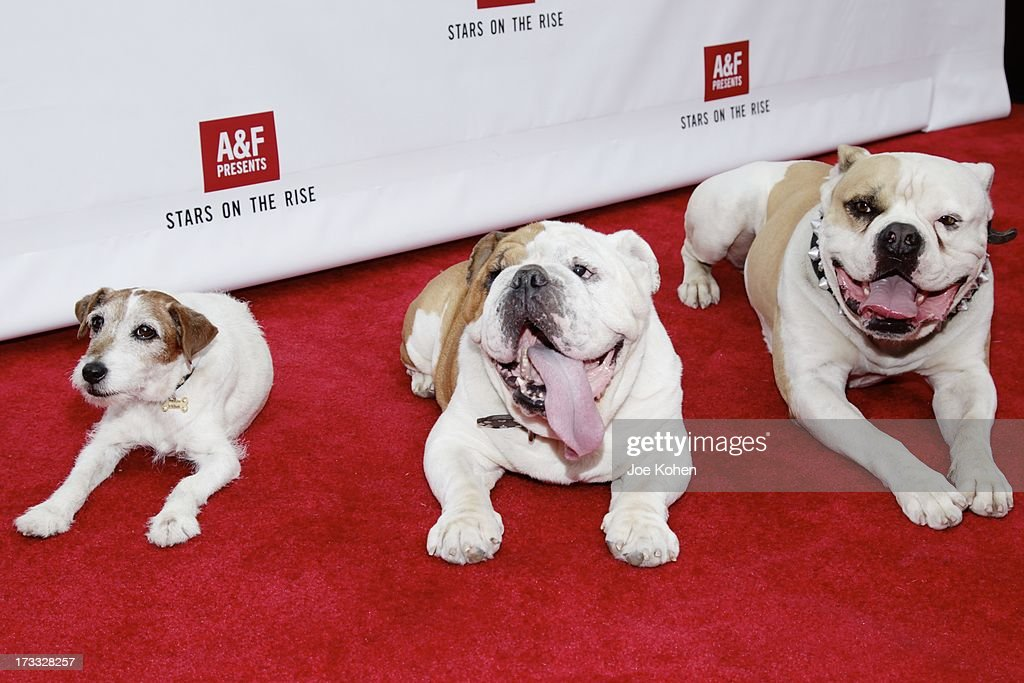 Dog actors Uggie, Popeye and Julio attend the Abercrombie & Fitch Co. presents their 2013 'Stars On The Rise!' at The Grove on July 11, 2013 in Los Angeles, California.