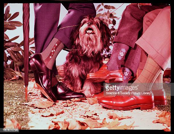 Dog amongst people's legs c1950 Photographic Advertising Limited was founded in 1926 by a group experienced in photojournalism and film The company...