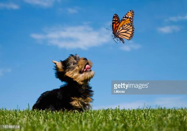Cão e Borboleta