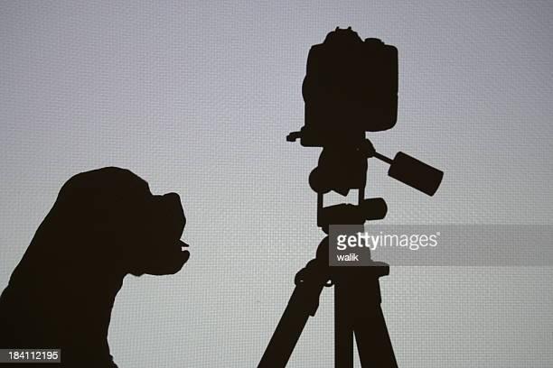Dog and camera shadow