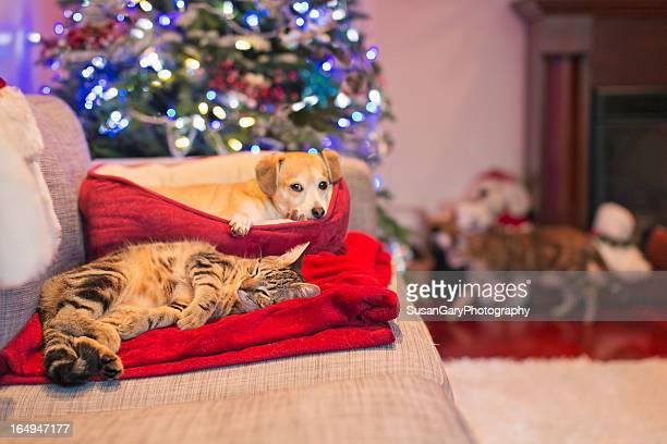 Dog and Cat Enjoy Christmas Cuddles