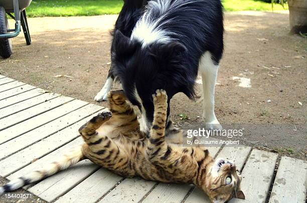 Dog and cat fight.