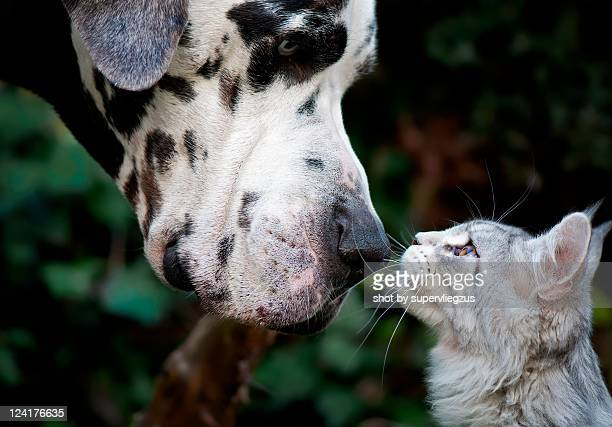 Dog and cat having moment