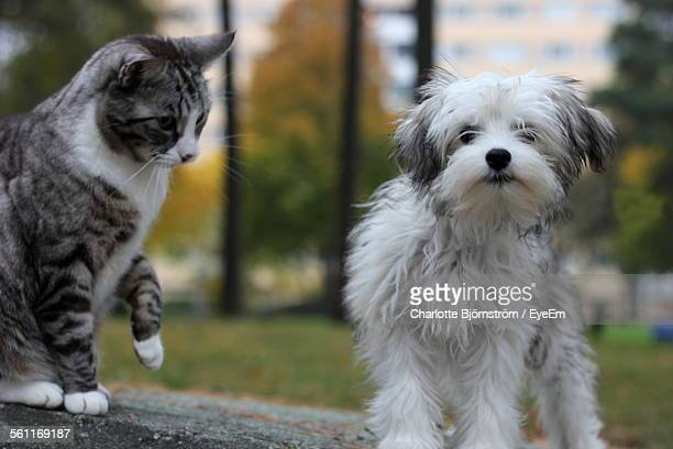 Dog And Cat In Park