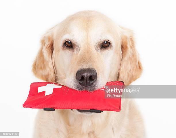 Hund und Erste-Hilfe-Kit
