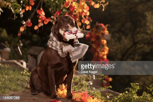 Dog and Gift : Stock Photo
