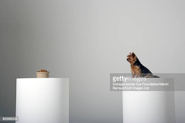 Dog and his food separated on two pedestals
