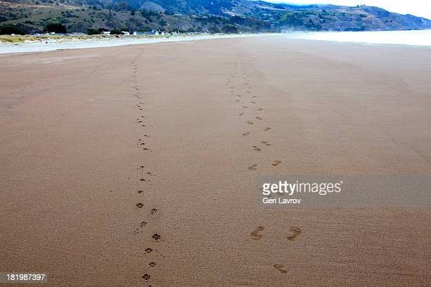 Dog and human footprints on the beach