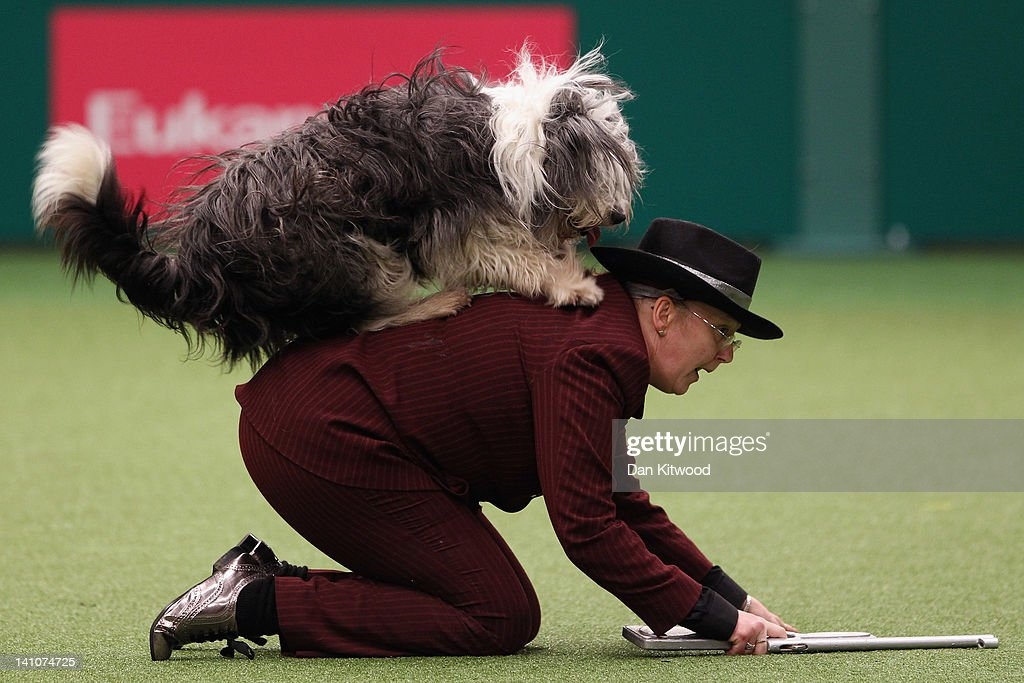 A dog and its owner perform a routine in the main arena on Day three of Crufts at the Birmingham NEC Arena on March 10, 2012 in Birmingham, England. During the annual four-day competition nearly 22,000 dogs and their owners will compete for a variety of accolades, ultimately seeking the coveted title of 'Best In Show'.