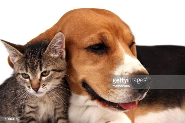 Dog and kitten sitting close together