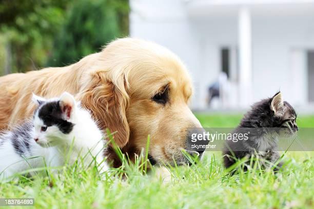 Piccolo cane e gatti insieme.