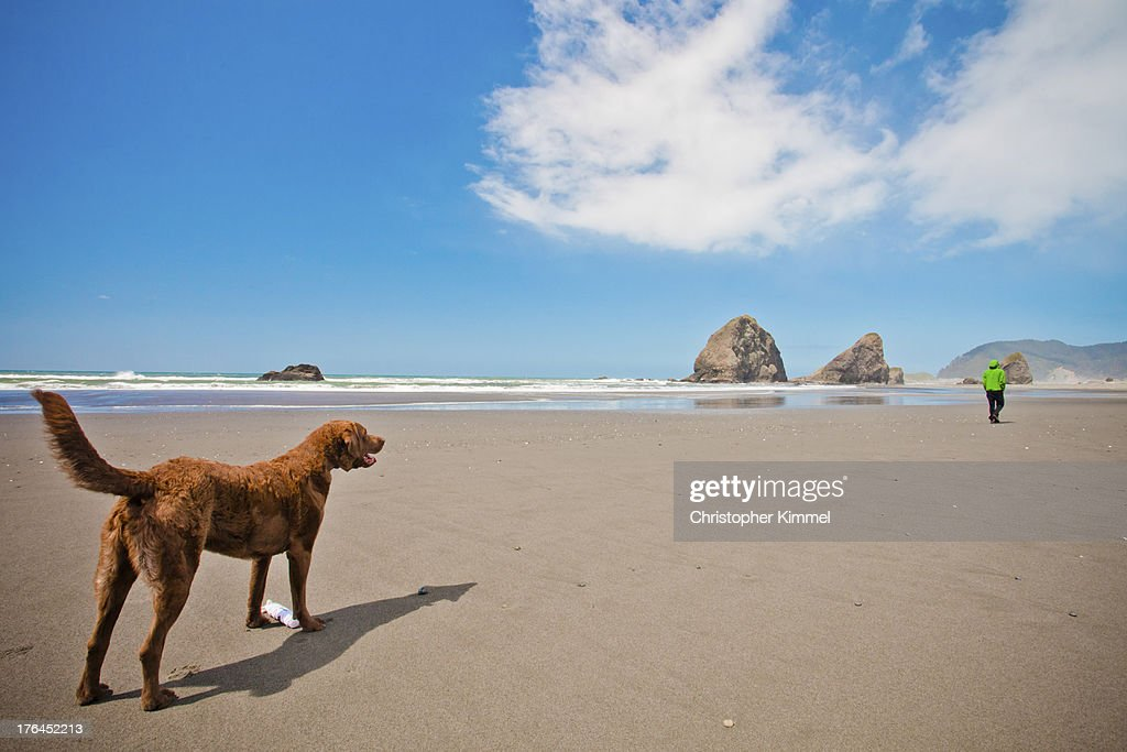 Dog and owner at beach