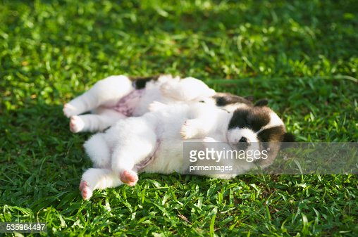 Dog and puppies : Stock Photo
