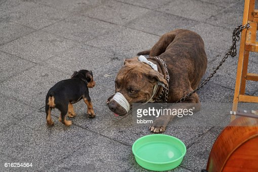dog and puppy at street : Foto de stock