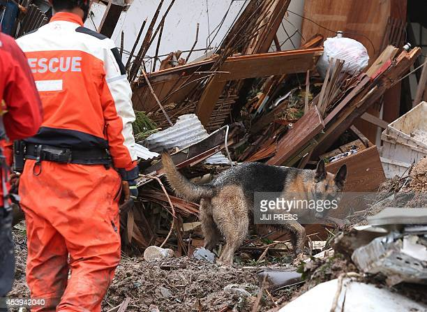 A dog and rescue workers search victims in collapsed house two days after a landslide hit a residential area in Hiroshima western Japan on late...
