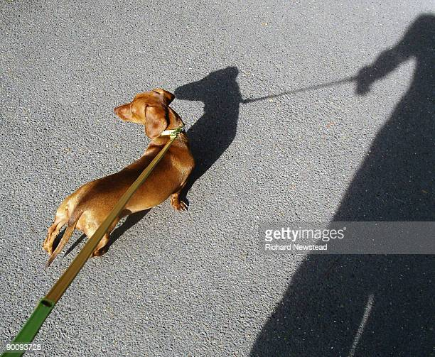 Dog and Shadows